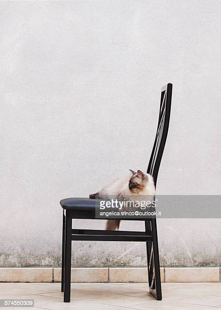 A cat on a chair