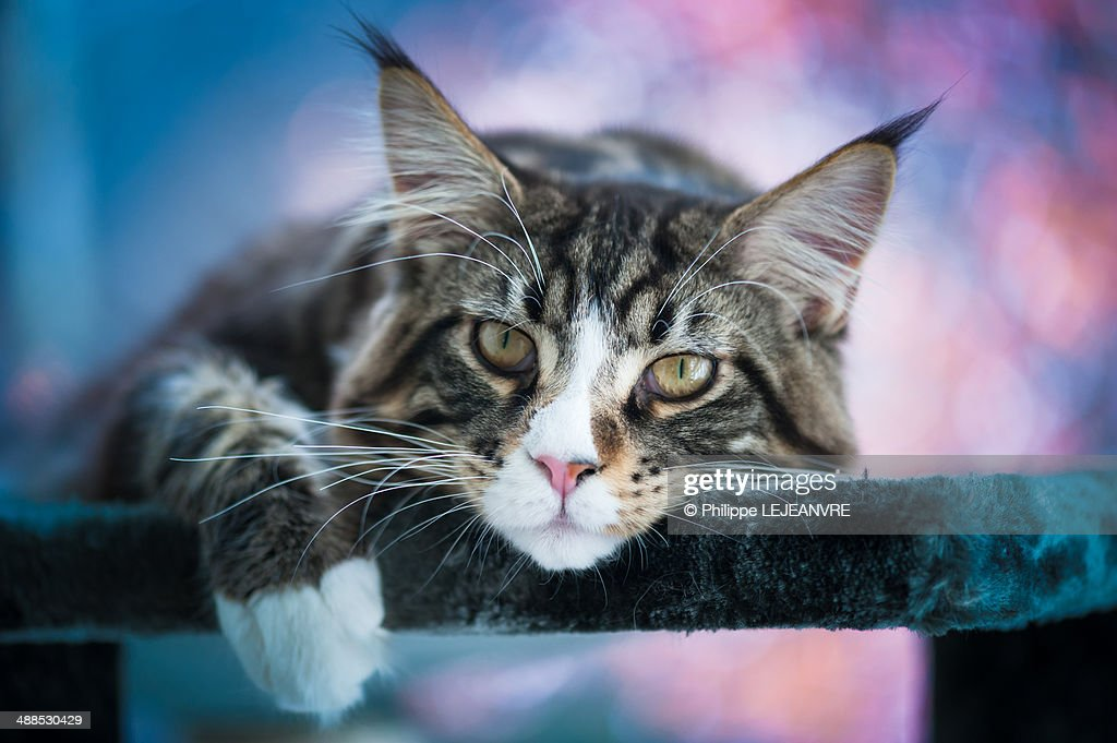 Cat on a colored background : Stock Photo
