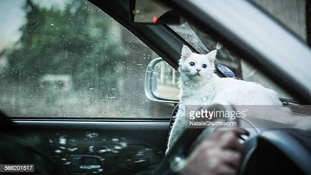 Cat on a dashboard