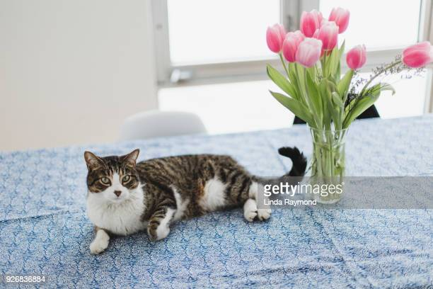 Cat on a kitchen table