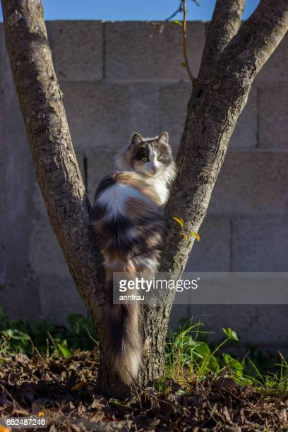 cat on a tree - annfrau stock photos and pictures