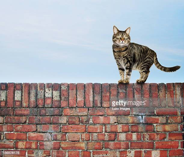 Cat on a wall against blue sky