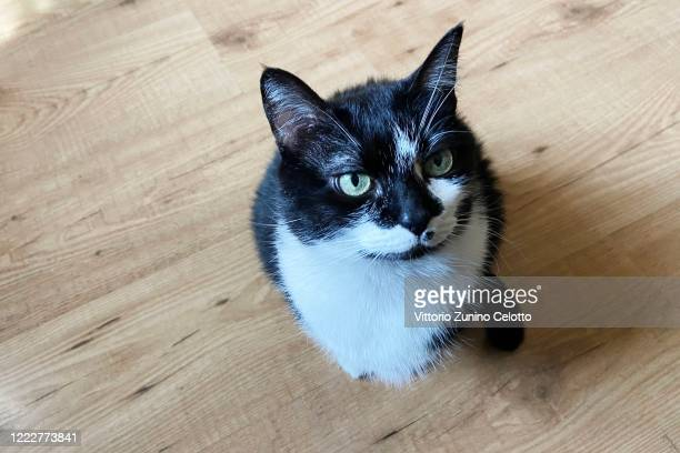 Cat on a wooden floor on May 04, 2020 in Milan, Italy. After getting used to spending 24 hours a day with their owners during the Covid-19 pandemic,...