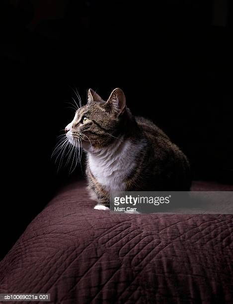 Cat on bed, close-up