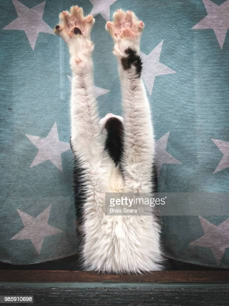 cat on blue starry background - paw stock pictures, royalty-free photos & images
