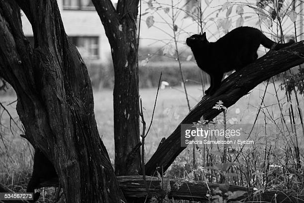 Cat On Branch