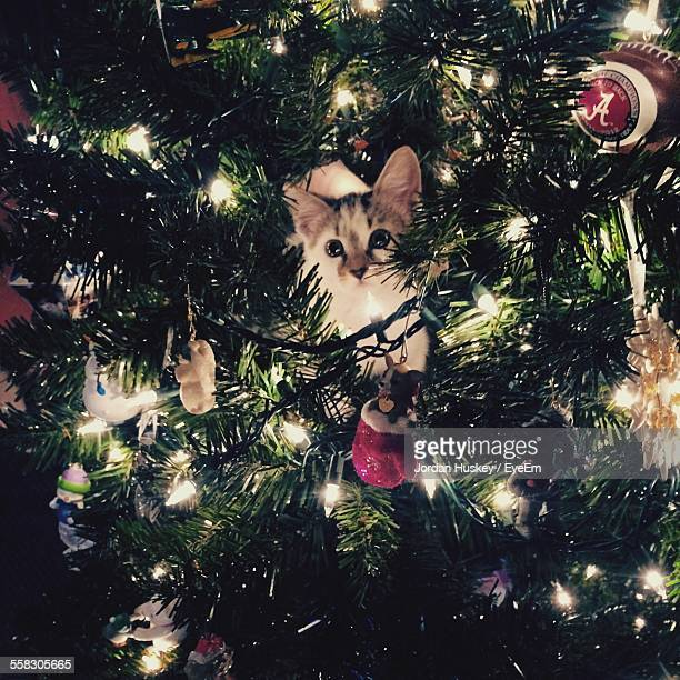Cat On Christmas Tree