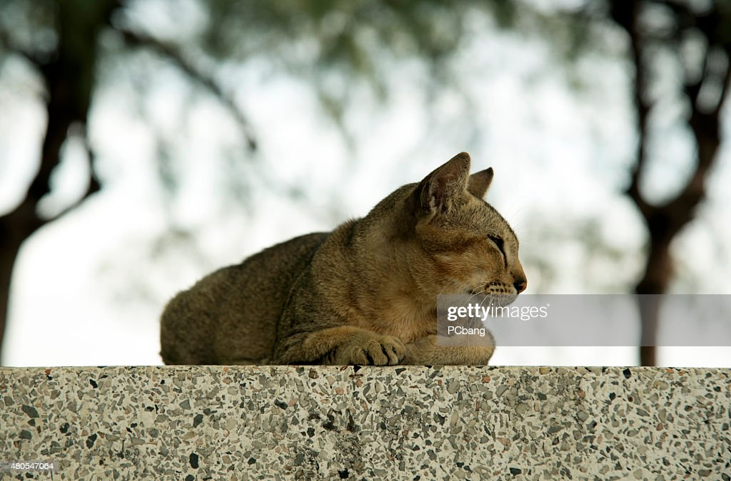 Gato em betão : Foto de stock