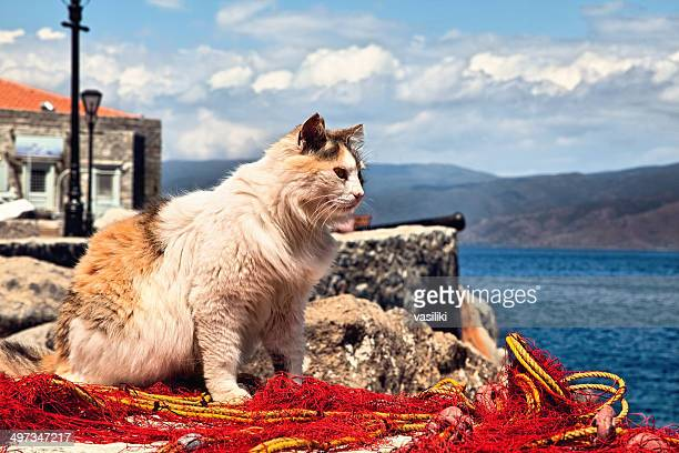 cat on fishing net looking out to sea - hydra greece stock photos and pictures