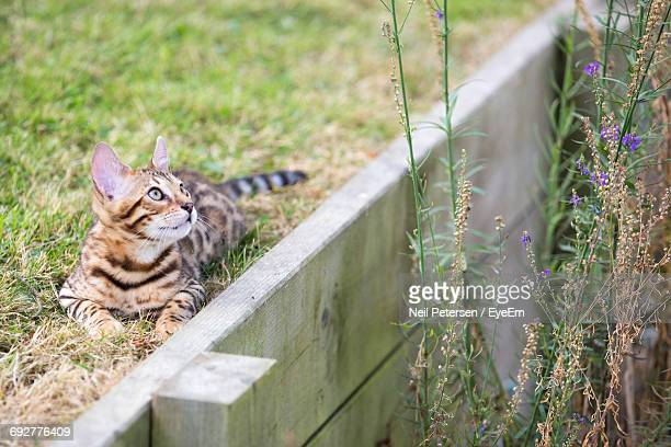 cat on grass - retaining wall stock pictures, royalty-free photos & images