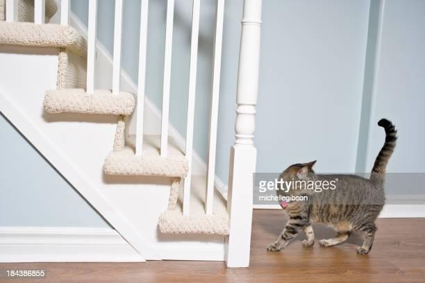 Cat on hardwood floors