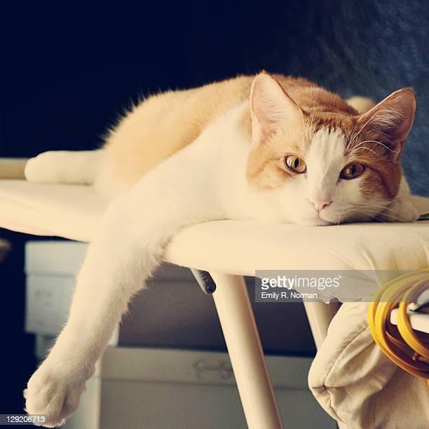 Cat on ironing board