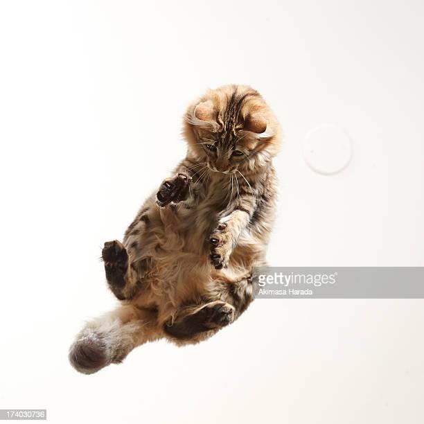 Cat on mid air