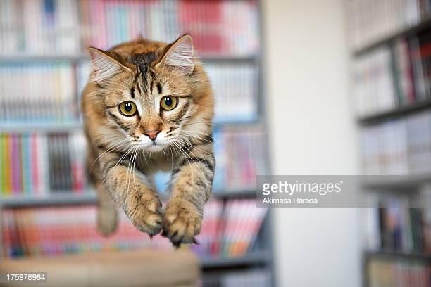 cat on midair