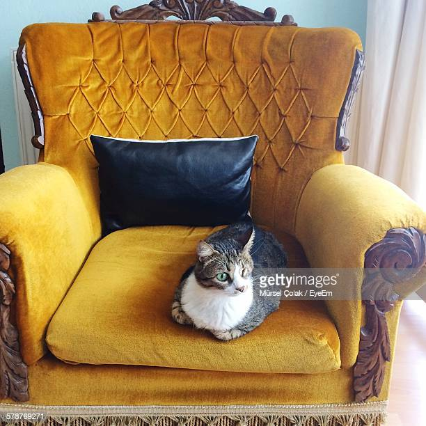 Cat On Old-Fashioned Armchair
