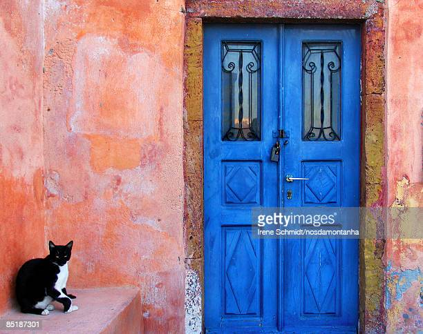 cat on pink wall with blue door