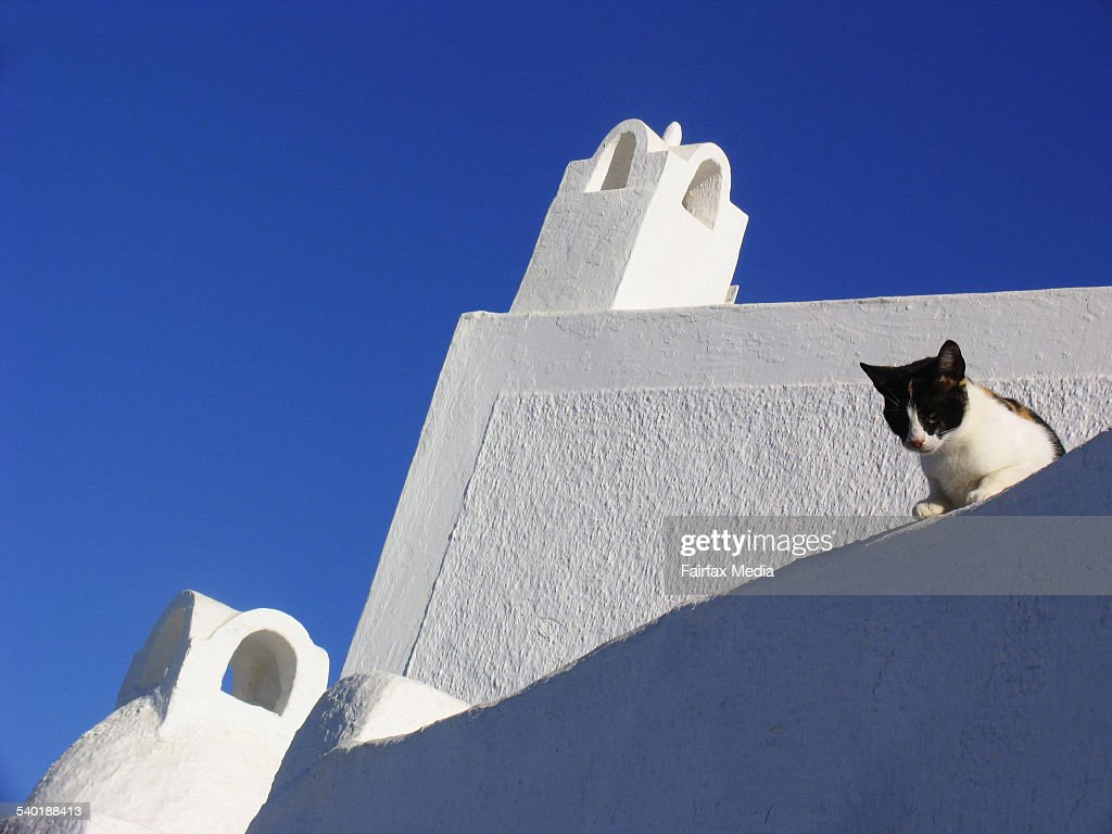 Phenomenal Cat On Roof Of A Traditionlal Style House Oia Santorini Home Interior And Landscaping Synyenasavecom