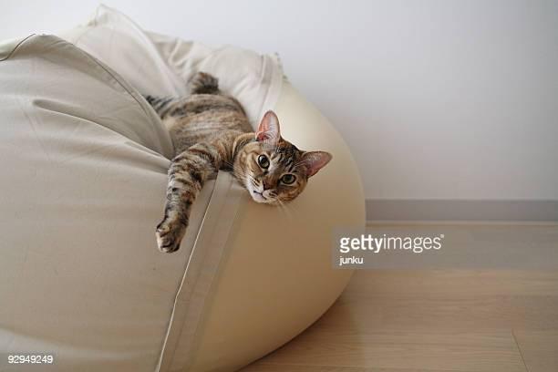 cat on sofa - sacco photos et images de collection