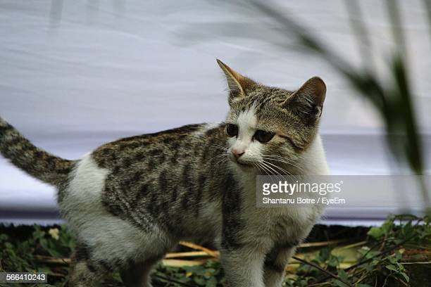 Cat On Standing On Field