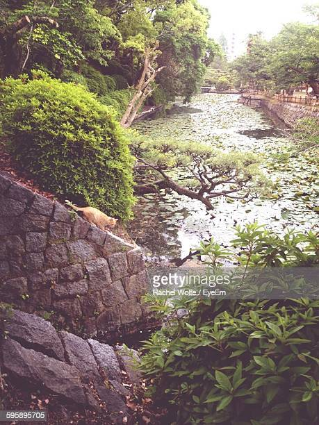 cat on stone wall by river in park - rachel wolfe stock pictures, royalty-free photos & images