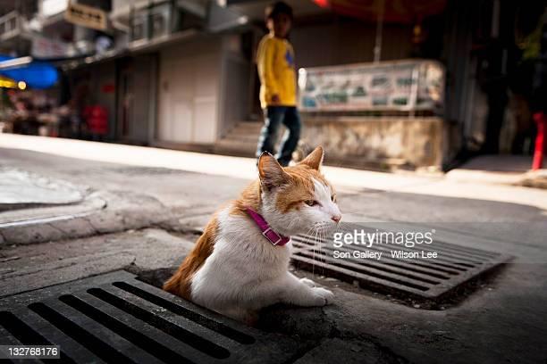 Cat on street
