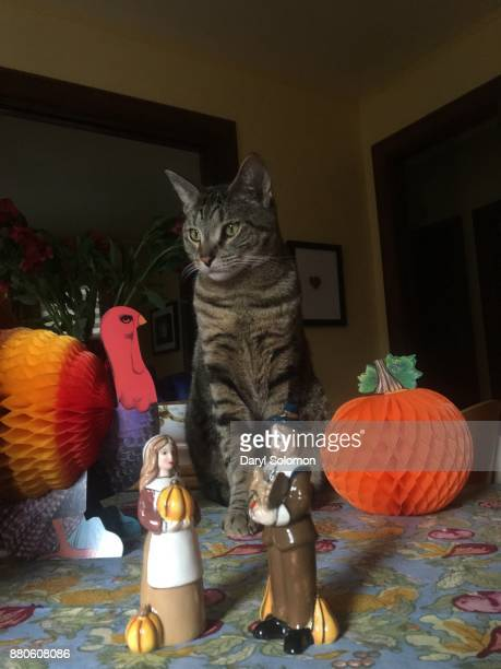 cat on thanksgiving table - thanksgiving cat stock pictures, royalty-free photos & images