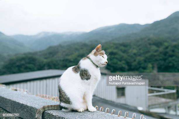 Cat on the balcony, Houtong Cat Village, Taiwan