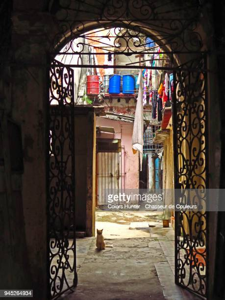 cat on the courtyard havana - old havana stock pictures, royalty-free photos & images