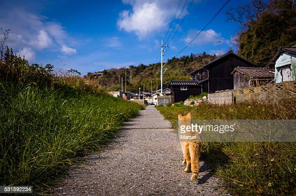 A cat on the rural path