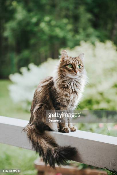 cat on the terrace - domestic cat stock pictures, royalty-free photos & images