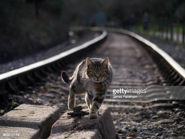 cat on the tracks - kitty patterson stock pictures, royalty-free photos & images