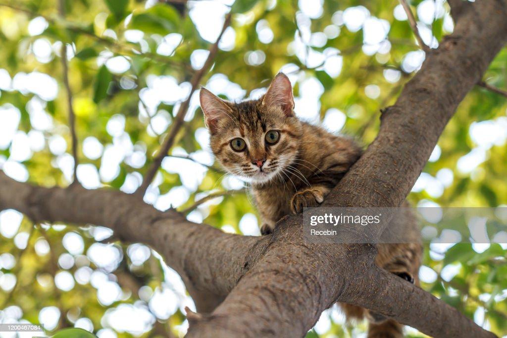 Cat on the tree : Stock Photo