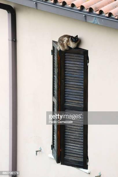 Cat on top of window  shutter