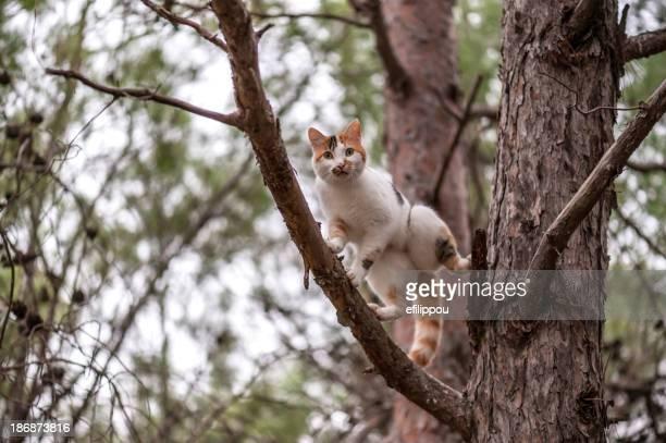 Chat sur un arbre