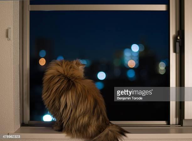 Cat on windowsil looking at city at night