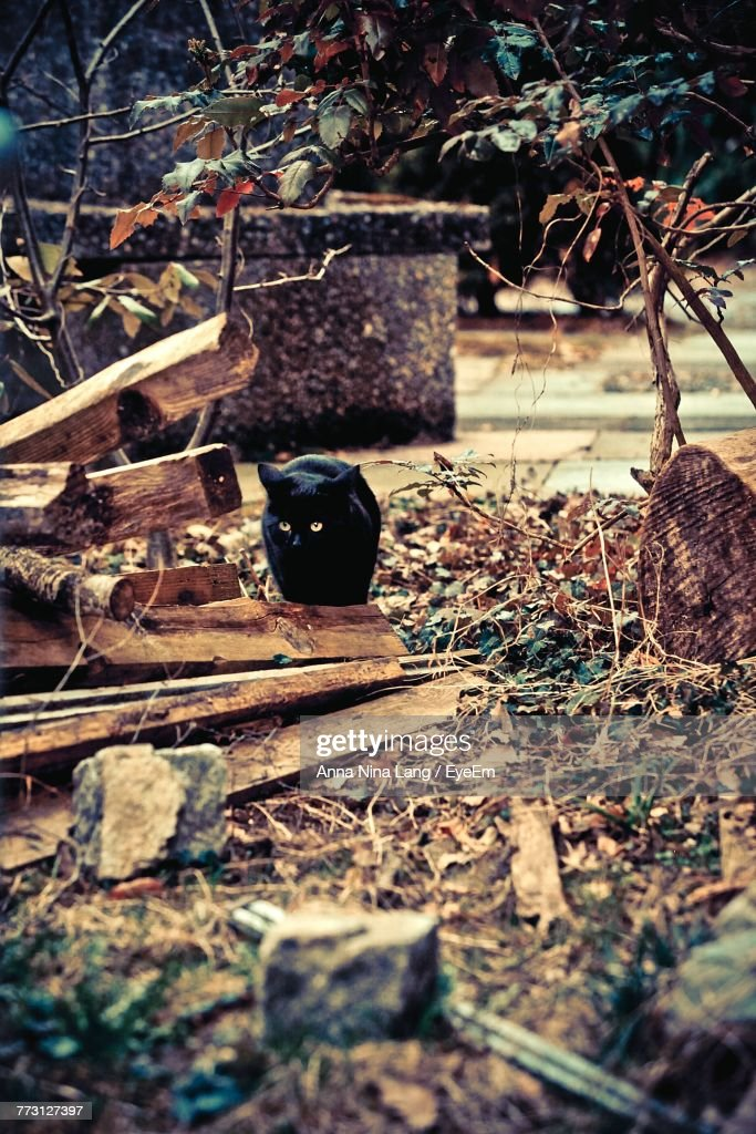 Cat On Wood In Back Yard : Photo