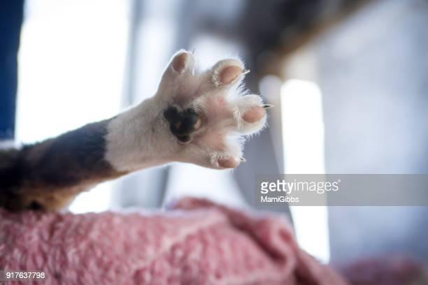 Cat open his leg