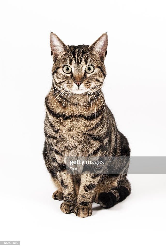 Cat Ora : Foto de stock