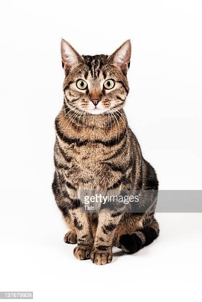 Cat Ora