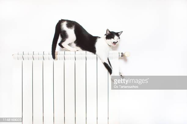 cat over a radiator in a funny position meowing or yawning - vinter os bildbanksfoton och bilder
