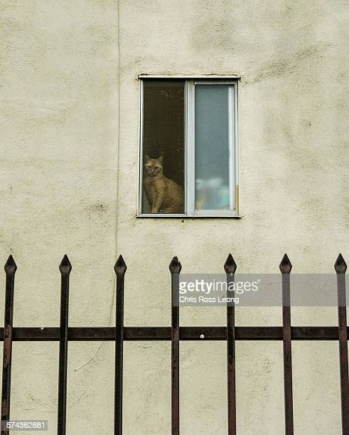 Cat Over Gate
