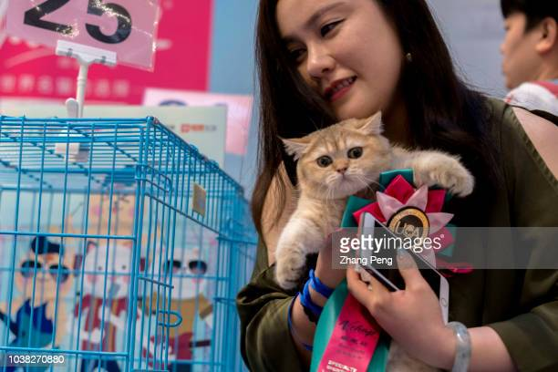 Cat owner hugs the winning cat gladly A purebred cat awarding competition is held in a shopping mall More and more Chinese young people have their...