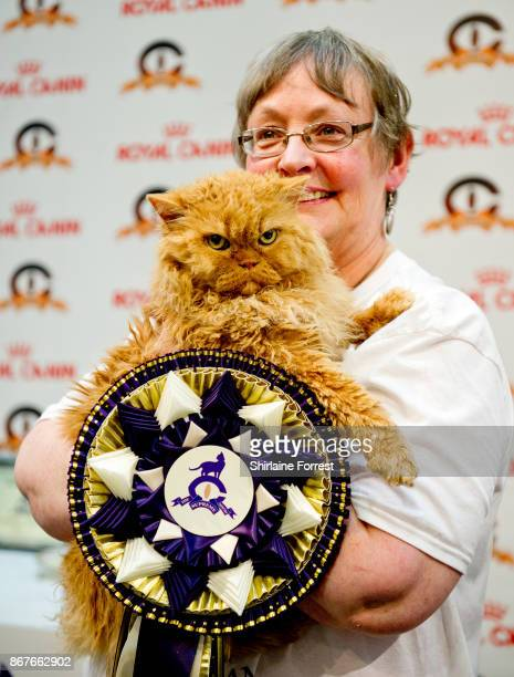 Cat participates in the GCCF Supreme Cat Show at National Exhibition Centre on October 28 2017 in Birmingham England