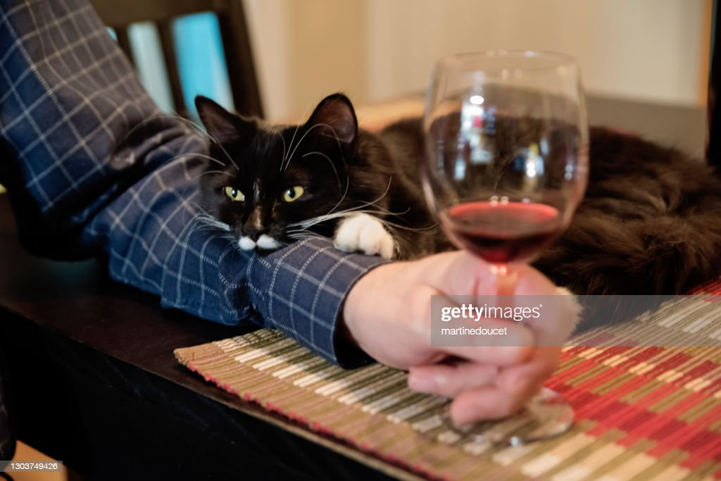 Cat participation at happy hour. : Stock Photo