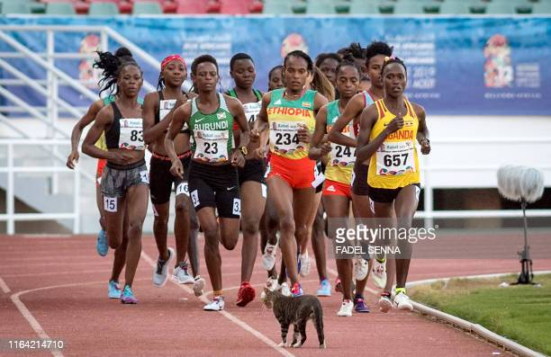 TOPSHOT A cat passes by as runners compete during the 5000m Women's Final at the 12th edition of the African Games on August 26 2019 in Rabat