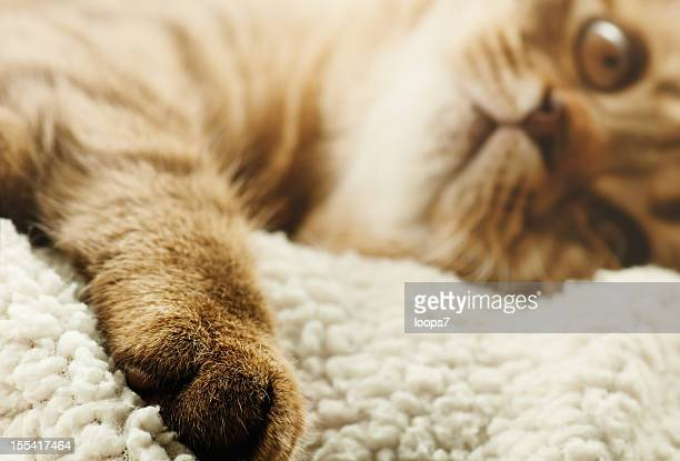 cat paw - loops7 stock photos and pictures