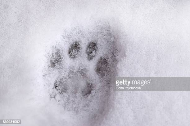 60 Top Cat Paw Print Pictures, Photos, & Images - Getty Images