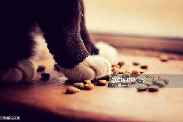 Cat paws with kibble