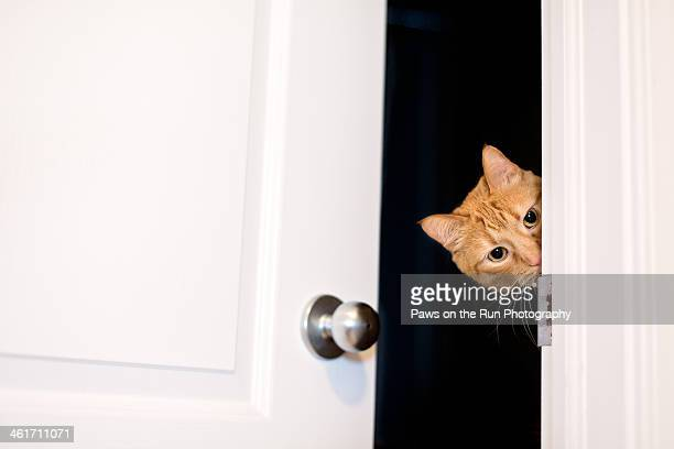 Cat peeking around door