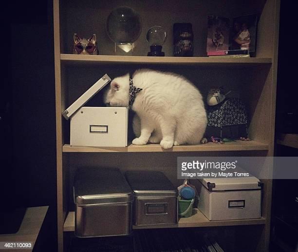 Cat peeking in a box